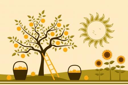 apple tree: vector apple tree, baskets of apples and sunflowers