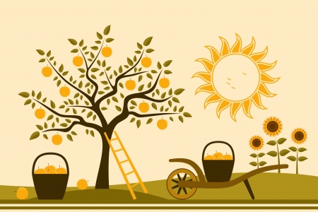 apple tree, hand barrow with basket of apples and sunflowers