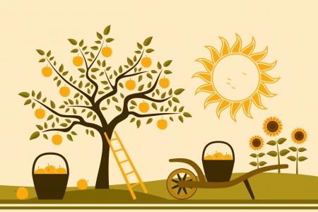 barrow: apple tree, hand barrow with basket of apples and sunflowers
