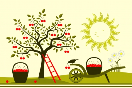 drupe: vector cherry tree and hand barrow with basket of cherries Illustration