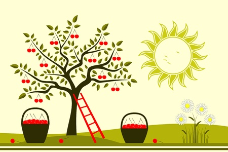 vector cherry tree, baskets of cherries and daisies Stock Vector - 17336454