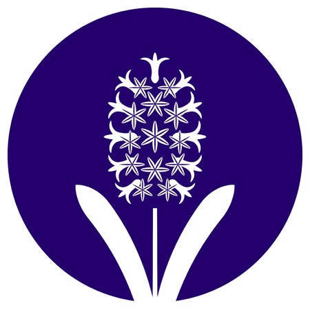 vector hyacinth isolated on blue round