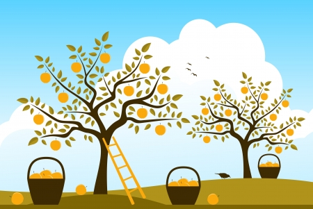 baskets of apples in apple orchard Vector
