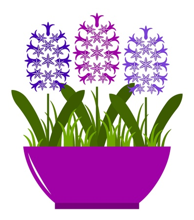 vector hyacinths in pot isolated on white background Vector