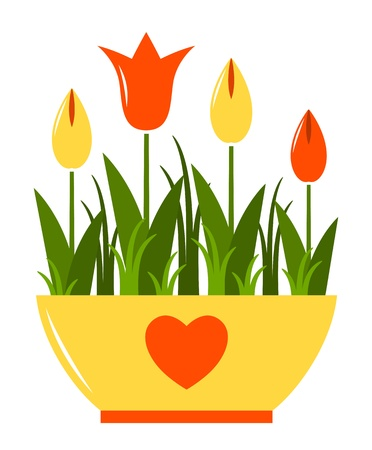 vector tulips in pot isolated on white background Vector