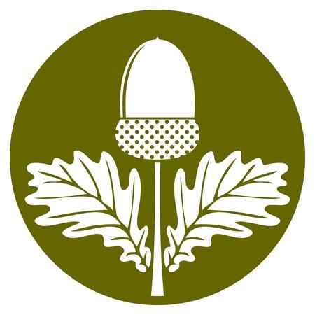 arbol roble: vector bellota con las hojas aisladas en redondo verde Vectores