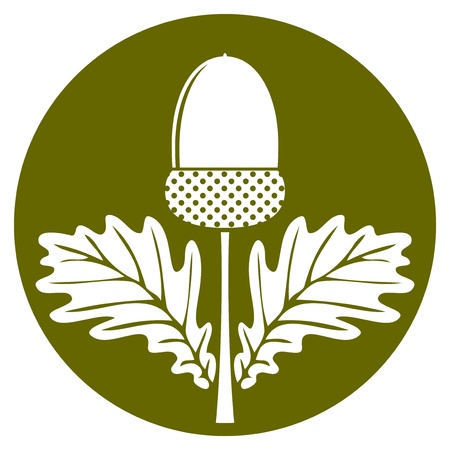 vector acorn with leaves isolated on green round Illustration