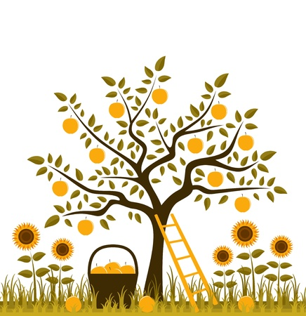 apple tree, basket of apples and sunflowers