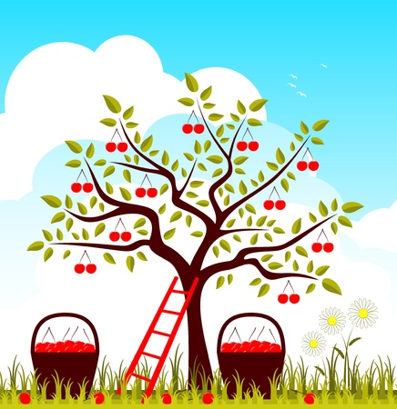 cherry tree, baskets of cherries and daisies Vector
