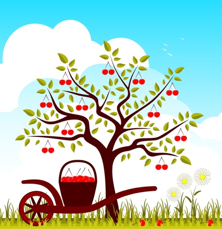 vector cherry tree, hand barrow with basket of cherries and daisies Vector