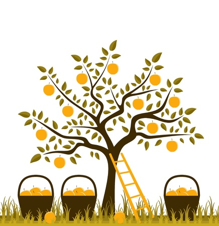 vector apple tree, ladder and baskets of apples Vector