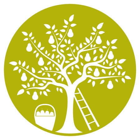 pear tree, ladder and basket of pears isolated on green round Vector