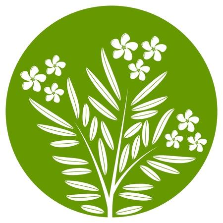 laurier rose: laurier-rose isol� sur rond vert Illustration