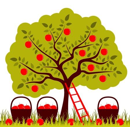 apfelbaum: Vektor-Apfelbaum, Leiter und K?rbe von ?pfeln Illustration