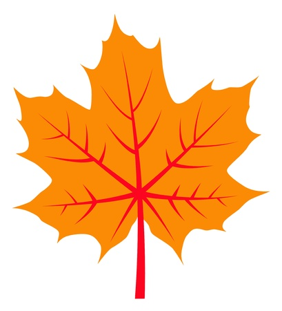 vector autumn maple leaf isolated on white background Vector