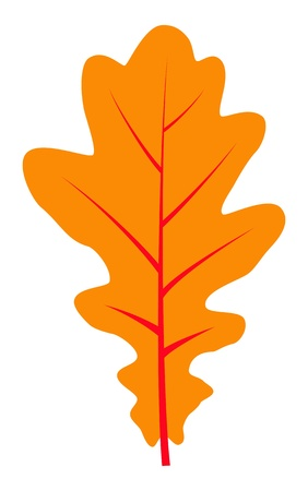 vector autumn oak leaf isolated on white background Vector