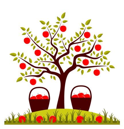 apple tree: apple tree and baskets of apples