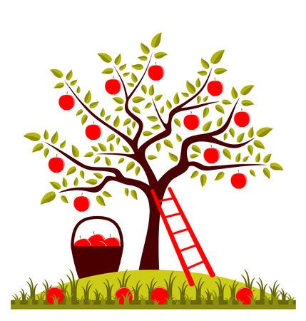 arbol de manzanas: manzano, escalera y una cesta de manzanas