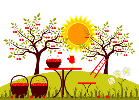 drupe: vector table with baskets of cherries and daisies in garden