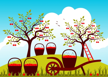 drupe: vector hand barrow and baskets of cherries in cherry orchard Illustration