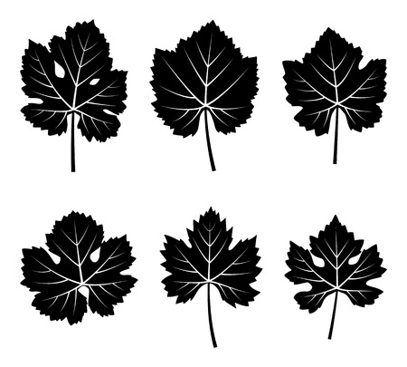 collection of vector grapevine leaves isolated on white background Иллюстрация