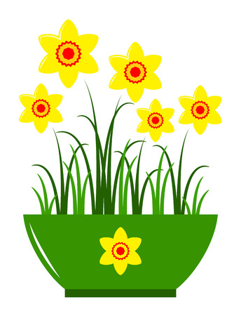 vector daffodils in pot isolated on white background Vector