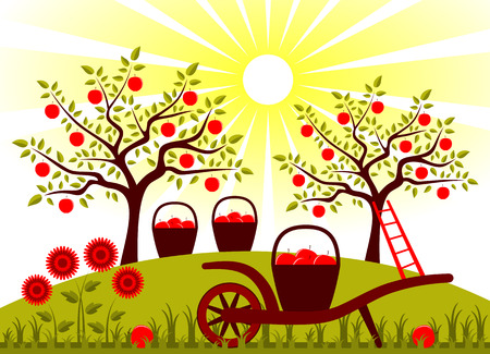 vector hand barrow with basket of apples in garden Vector