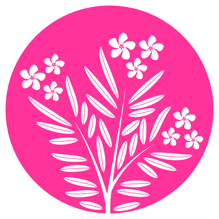 oleander: vector oleander isolated on pink round Illustration