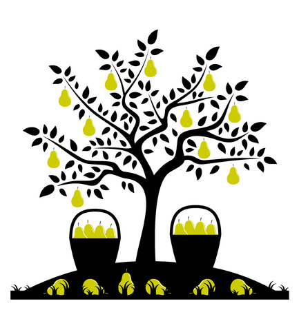 vector pear tree and baskets of pears Vector