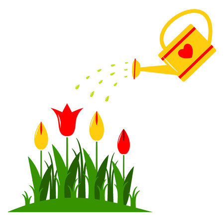 clump: vector tulips and watering can isolated on white background