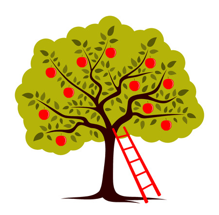apple orchard: vector apple tree and ladder isolated on white background Illustration
