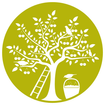 drupe: vector cherry tree, ladder, basket of cherries and birds isolated on green round