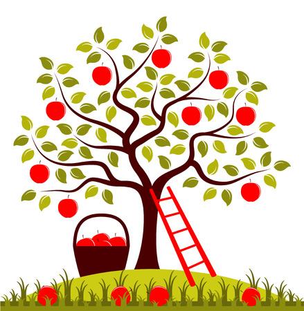 vector appel boom, ladder en mand van appels Stock Illustratie