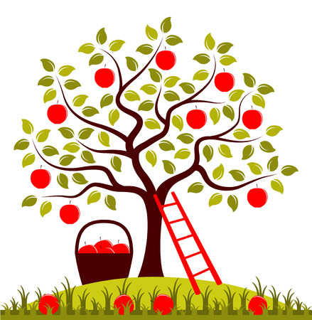vector apple tree, ladder and basket of apples Banco de Imagens - 30931740