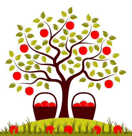 arboles frutales: vector �rbol de manzanas y cestas de manzanas Vectores