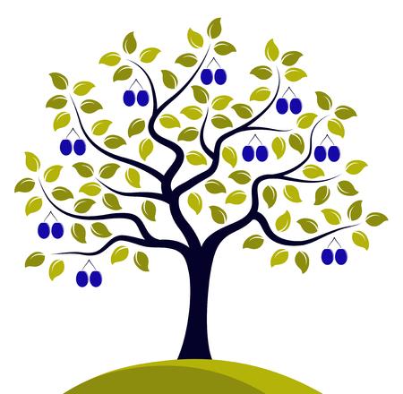 drupe: plum tree isolated on white background Illustration
