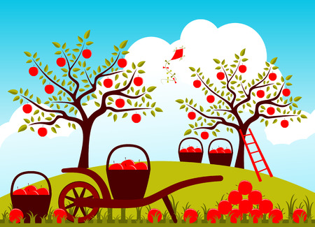 hand barrow and baskets of apples in apple orchard Vector