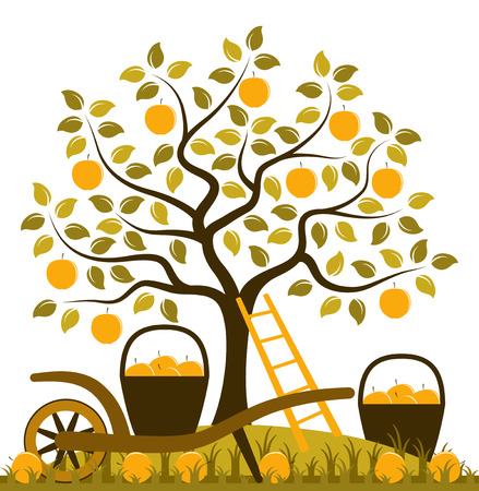 apple tree, ladder and hand barrow with basket of apples Illustration
