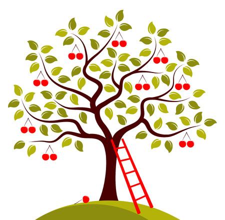 Vector árbol de cerezo y la escalera aislados en fondo blanco Foto de archivo - 32872877