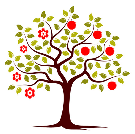 vector apple tree in two seasons isolated on white background Vector
