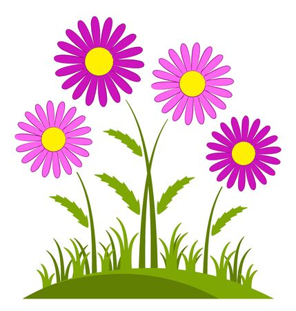clump: vector clump of pink daisies isolated on white background