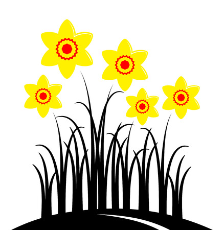 tuft: vector clump of daffodils isolated on white background