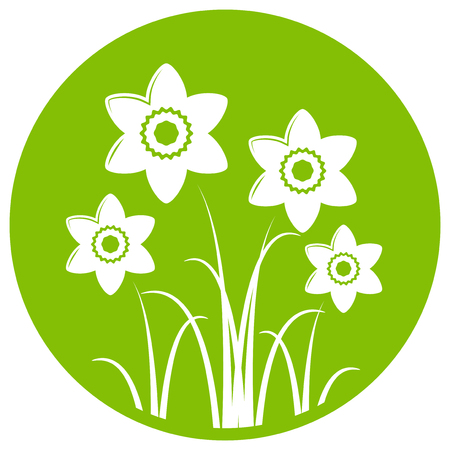 tuft: vector clump of daffodils isolated on green round