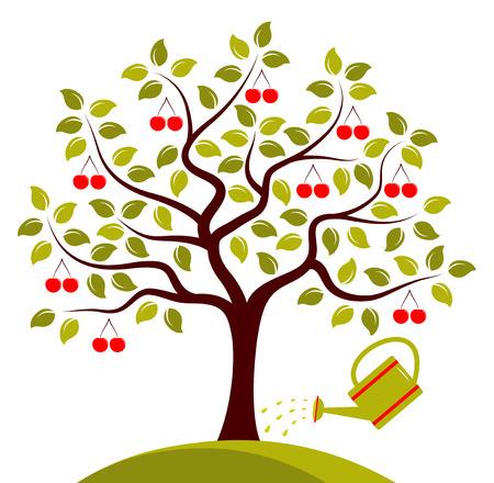 Vettore albero di ciliegio e annaffiatoio isolato su sfondo bianco Archivio Fotografico - 36371352