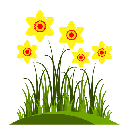 clump: vector clump of daffodils isolated on white background