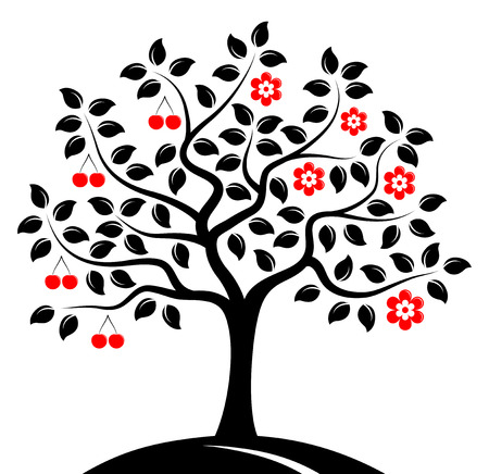 drupe: vector cherry tree in two seasons isolated on white background Illustration