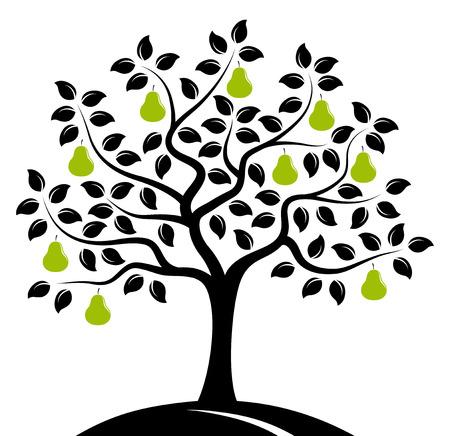 白い背景に分離されたベクトルの梨の木 写真素材 - 36790238