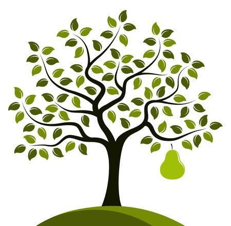 Vektor-Birnenbaum mit einem großen Birne isoliert auf weißem Hintergrund Vektorgrafik