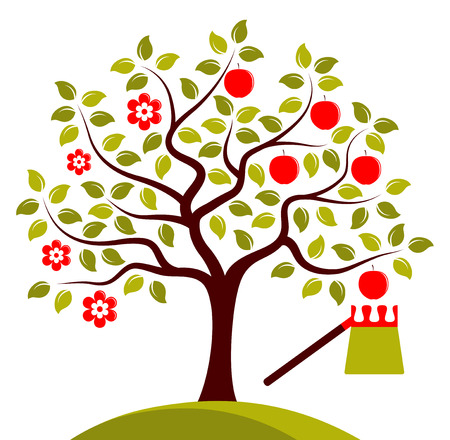 to gather: vector apple tree in two seasons isolated on white background