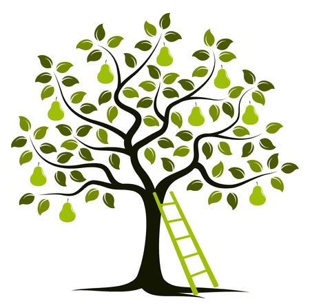 pear tree: vector pear tree and ladder isolated on white background Illustration